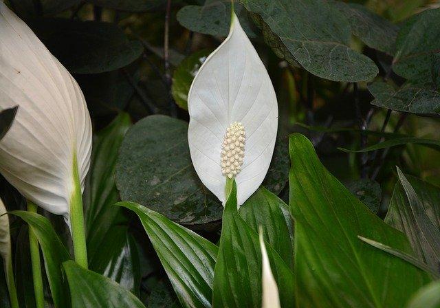 Rostlinky v bytě