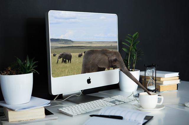 slon s kávou