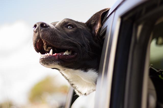 pes v okénku
